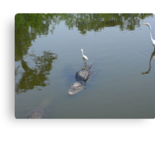 Why did the crane cross the swamp? Canvas Print