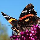 September Butterfly by ElsT