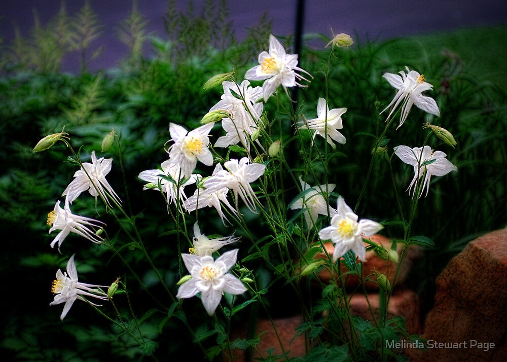 """""""Flowers By Day, Fairies Taking flight  At Night!"""" by Melinda Stewart Page"""