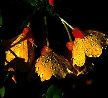 Night Lights 2 by Elfriede Fulda