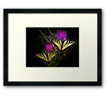 Stick Together ~Swallowtail Butterflies ~ Framed Print