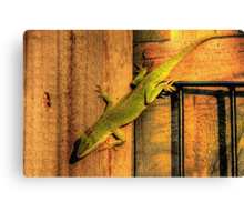 My Chameleon Friend Canvas Print