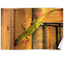 My Chameleon Friend Poster