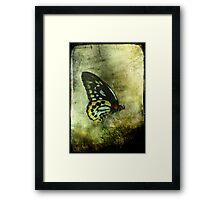 The Birdwing Framed Print