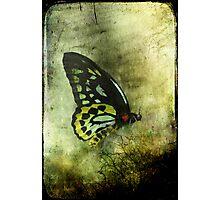The Birdwing Photographic Print