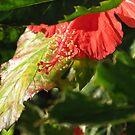 Hiding Hibiscus - Florida by Glenn Cecero