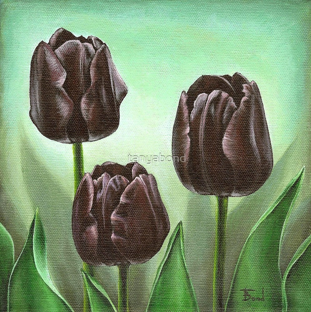 Tulips by tanyabond