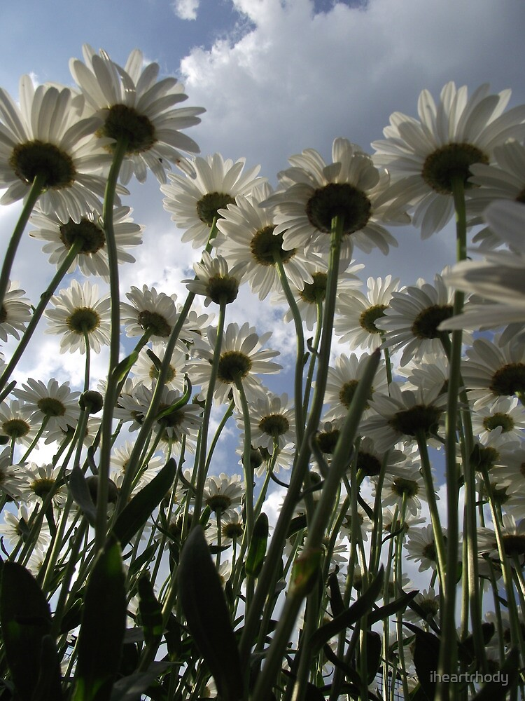 Daisies by iheartrhody