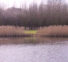 A break through the reeds by julieinuk