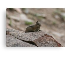 Little Creature In A Big World Canvas Print