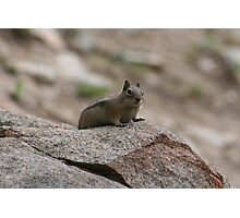 Little Creature In A Big World Photographic Print