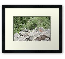 Rocks Among The Shrubs Framed Print