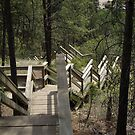 Fintry Stairs by Jeff Ashworth & Pat DeLeenheer