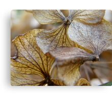 LONDON GARDEN 14 ~ Summer Falls To Autumn & Feeds The Cycle Canvas Print