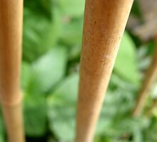 LONDON GARDEN 6 ~ Bamboo Climbers  by Tuartkatz