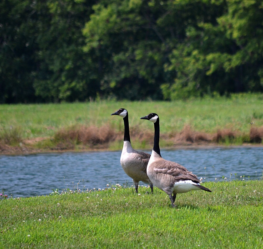 Watchful Parents by Sheryl Gerhard