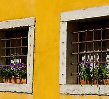 Window Boxes by Alf Myers