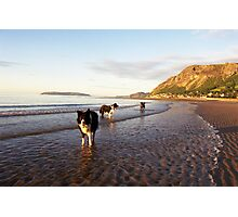 Indy, Jess and Oscar. Photographic Print