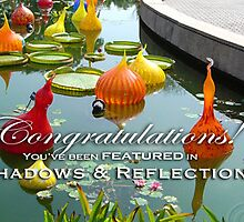 Shadows & Reflections Feature Banner 2 by Susana Weber
