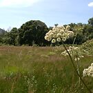 In the Big Meadow by CliveOnBeara