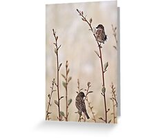 A Lovely Pair Greeting Card