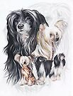 Chinese Crested with Ghost Image by BarbBarcikKeith