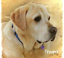 Trooper by Brenda Boisvert