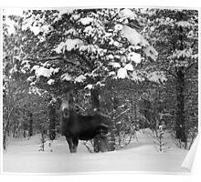 Wild Elk - Lapland Sweden Poster