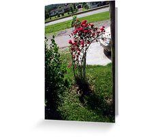 More Roses! Greeting Card