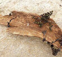 Wood you believe it? by Fara
