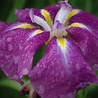 Purple Passion and Tears by christiane