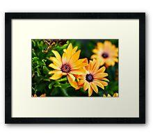 Garden Daisies Framed Print
