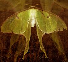 Moth Memorial by Tibby Steedly