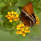 Butterfly breakfast by bettywiley