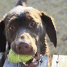 My Ball! by Stormy Brannan