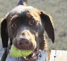 My Ball! by Stormy Brannan