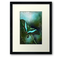 Emerald Peacock Swallowtail Framed Print
