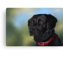 Black Lab - Dog Portrait Canvas Print