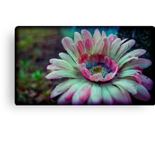 like spring, in late fall Canvas Print