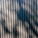 summer shadow  2 by richard  webb