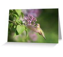 Lilac Hummingbird Greeting Card