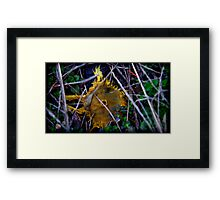only the yellow remained Framed Print