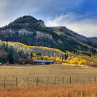 Mountain Gold by Brendon Perkins