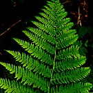Fern - Girdwood Alaska by Melissa Seaback