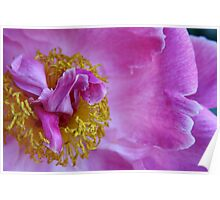 Peony Dreams Poster