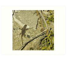 wetlands aligator lizard Art Print