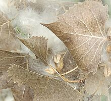 Cottonwood Tree Leaves by CarolM