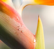 Bird of Paradise by Kenneth Ng