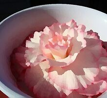 Begonia in Bowl by sfonativeboy