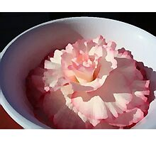Begonia in Bowl Photographic Print